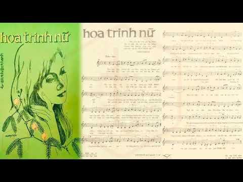 🎵 Hoa Trinh Nữ (Trần Thiện Thanh) Nhật Trường Pre 1975 | Tờ Nhạc Xưa