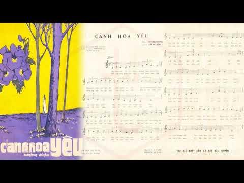 🎵 Cánh Hoa Yêu (Hoàng Trọng, Vĩnh Phúc) Thanh Thúy Pre 1975 | Tờ Nhạc Xưa