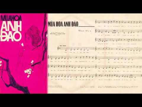 🎵 Mùa Hoa Anh Đào (Thanh Sơn) Hoàng Oanh Pre 1975 | Tờ Nhạc Xưa
